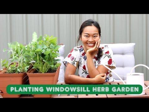 Planting Windowsill Herb & Strawberry Garden
