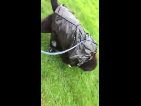 Garbage bag raincoat n walk