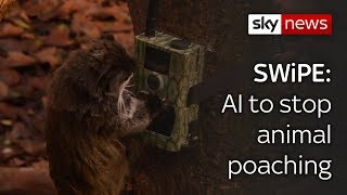 Swipe | Mobile World Congress & AI to stop animal poaching