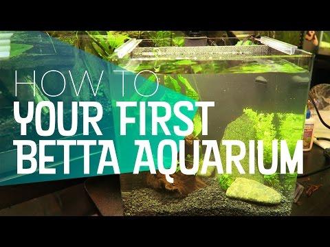 How To: Your First Betta Aquarium Setup | 🐻 Bear Necessities