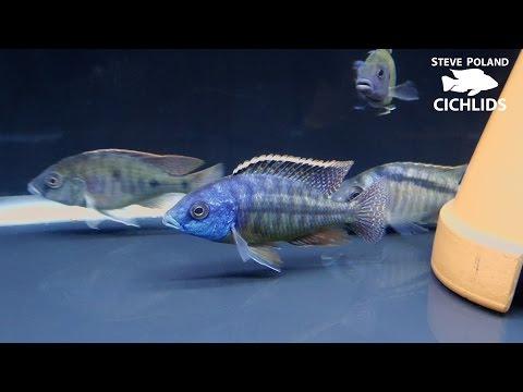 Unboxing New Fish from Brandy Kircher