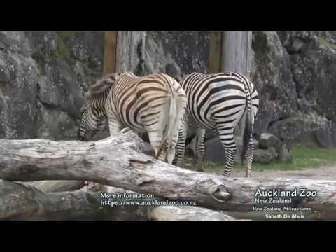 Auckland Zoo Part 1