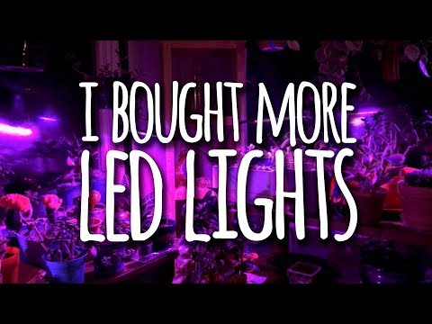 I Bought More LED Grow Lights for my Indoor Plants and Totally Recommend Them