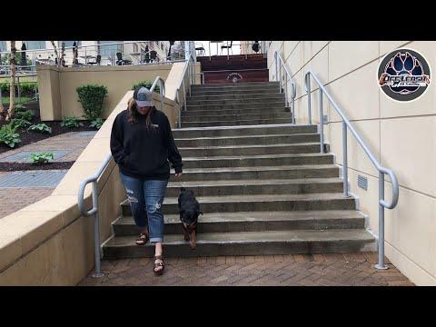 Ira | Rottweiler Puppy | Off Leash Training