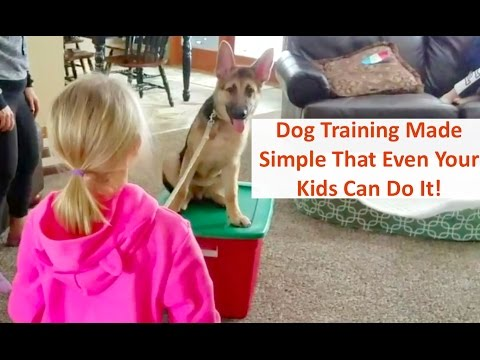 Columbus Ohio Dog Training with Terry Cook Is So Easy That Even Your Kids Can Do It!