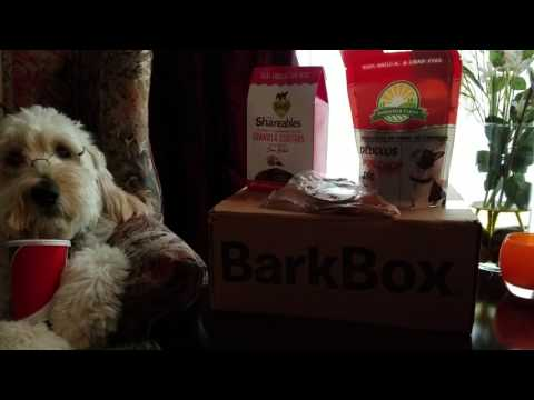 Service Dog Playing Mannequin Dog with his BarkBox