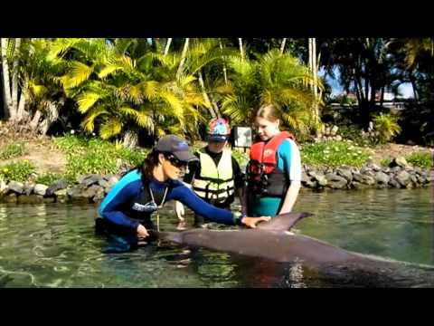 MACK'S SPECIAL NEEDS MEET WITH THE DOLPHIN AT SEAWORLD WITH HIS BFF ABBEY