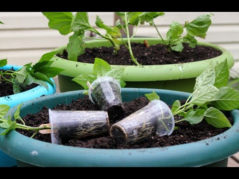 Planting A Container Vegetable Garden-Tomatoes-Peppers-Eggplants