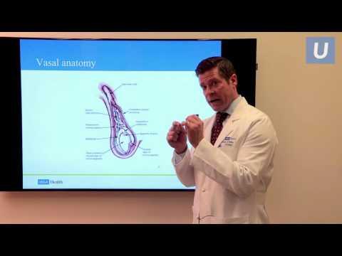 Vasectomy Reversal: Fertility Options After Vasectomy | #UCLAMDChat Webinars