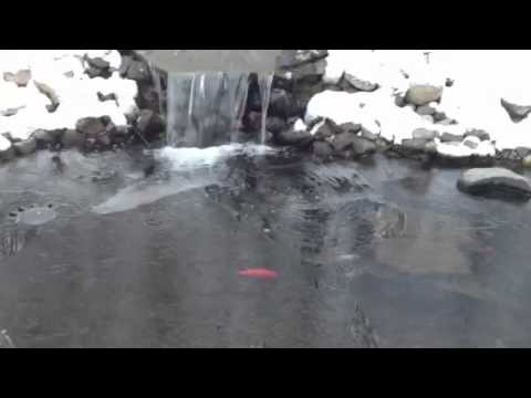 Koi pond in the winter