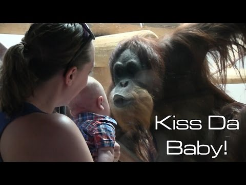 Xxx Mp4 Orangutan Kisses Baby 3gp Sex