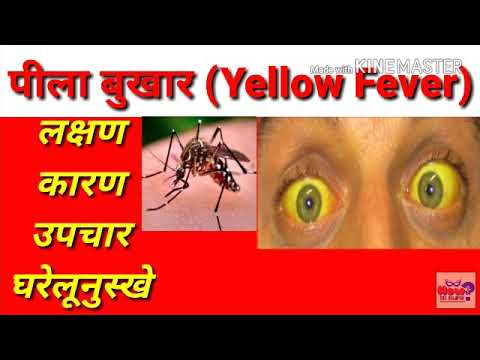 Yellow fever पीला बुखार | Flavi Virus | Pila Bukhar | पीतज्वर | yellow fever treatment in hindi