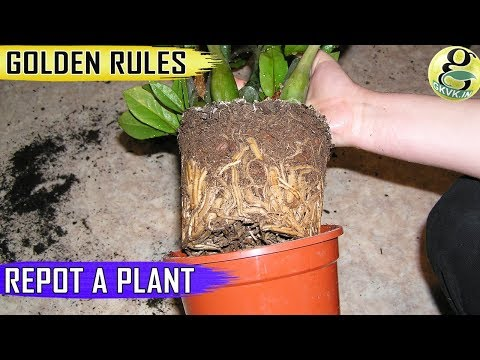 REPOTTING PLANTS: GOLDEN RULES | When and How to Repot Plants - Tips