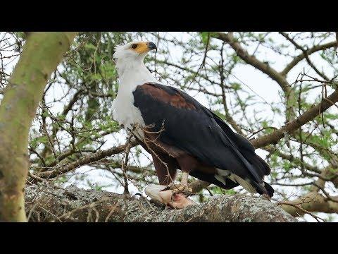 Uganda - Queen Elisabeth Park