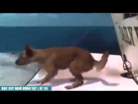 A Funny Animal Videos Compilation 2015