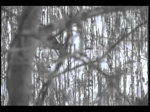 Bob Walker Hunts Whitetail in Southern Illinois with Rocky Branch