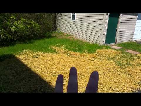 2015.04.27 - Placing straw on the new grass seed