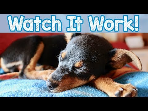 Watch it Work! - Watch More Dogs Sleeping to Relax My Dog Music! 4 Million Dogs Helped Worldwide!
