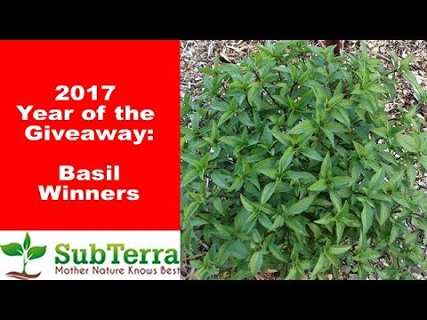 July Basil Winners
