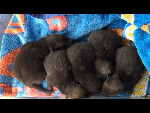 This Man Shared A Photo Of Five Little Pups  Then Somebody Realized They Weren't What They Seem