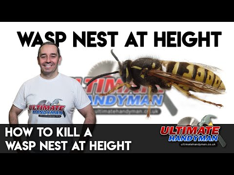 how to kill a wasp nest at height