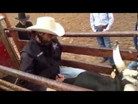 How to leave the chute on a bucking bull