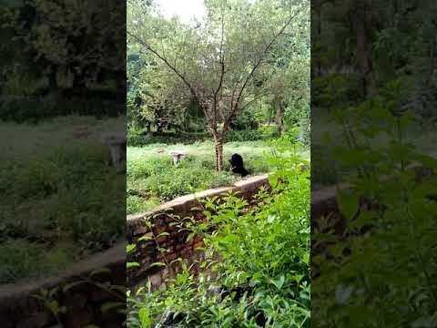 Black Bear at Gwalior zoo