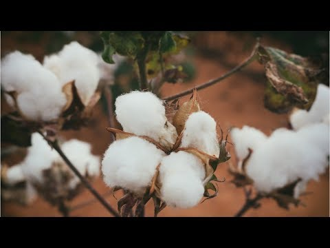Cotton decoration complaint made on Hobby Lobby's Facebook page, goes viral