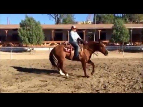 AQHA Stallion for sale in California TNT Buffalo Doc