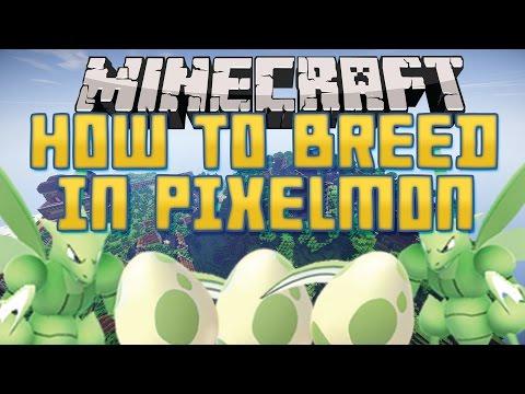 How to start breeding! | Pixelmon guide