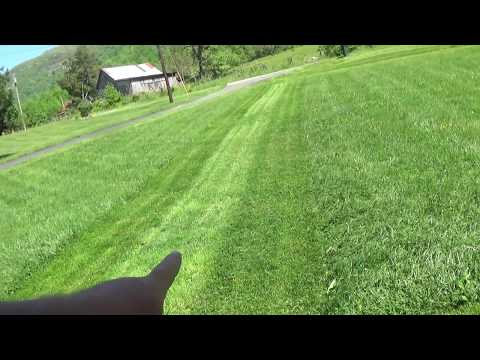Super Thick Grass Cut & Striped! With Bamboo
