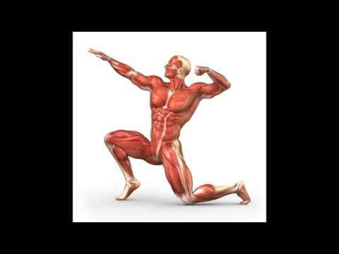 Connection between the Muscular System and Respiratory System