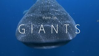 G I A N T S - Whale sharks of Isla Mujeres