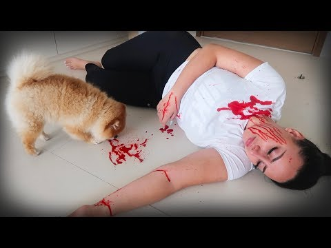 FAKING MY DEATH IN FRONT OF MY DOG!! 😂(FUNNY DOG REACTION)