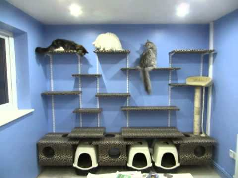 The cat wall