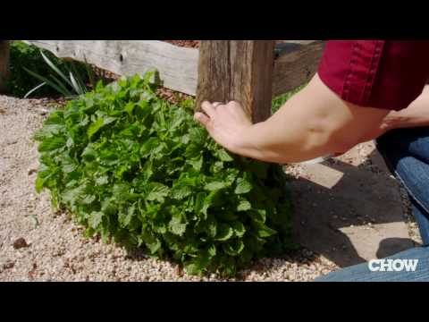 How to Get Rid of Garden Snails - CHOW Tip