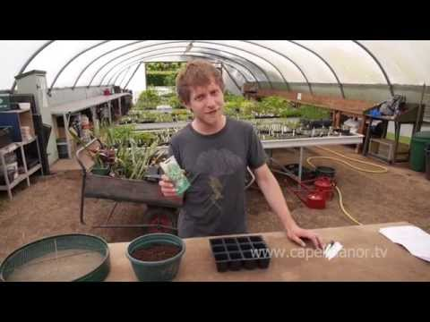 How to grow Mr Fothergill's sweet basil from seed