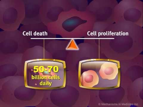 Introduction to Cancer Biology (Part 2): Loss of Apoptosis