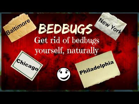 Bedbugs: Get rid of bedbugs yourself, naturally! Baltimore, New York, Chicago, Philadelphia,