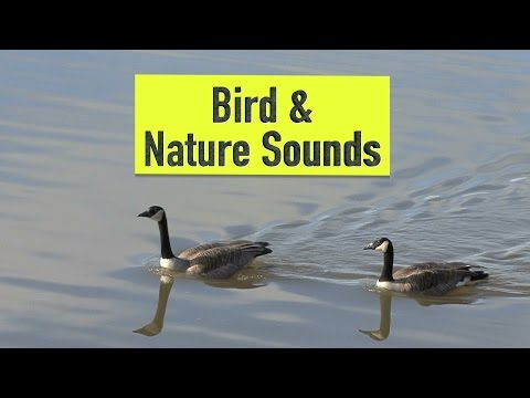 Bird & Nature Sounds | Canada Day in the Country