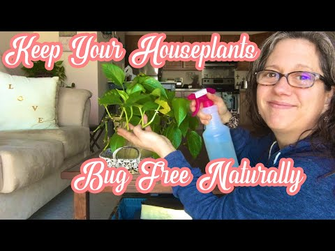How To Keep Your Houseplants Bug Free Naturally