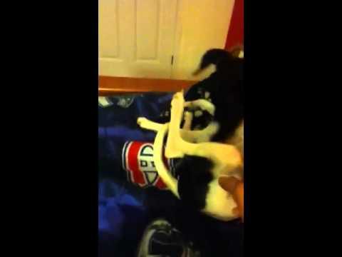 Dog biting her leg