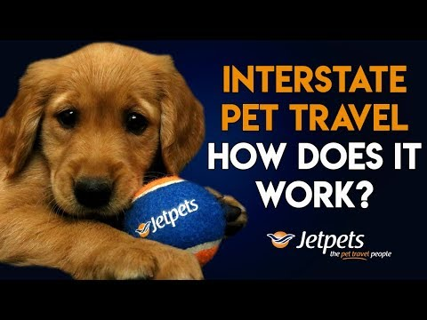 Interstate Pet Travel: How does it work?