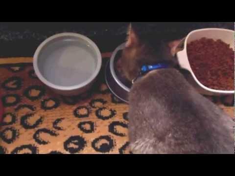 Cats (& Dogs) Need Apple Cider Vinegar
