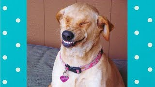 Cute SMILING Dogs | Funny Pets Video Compilation