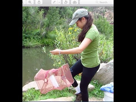 Crawfishing Arizona, Catching an Invasive Species of Crayfish Crayster Field Research