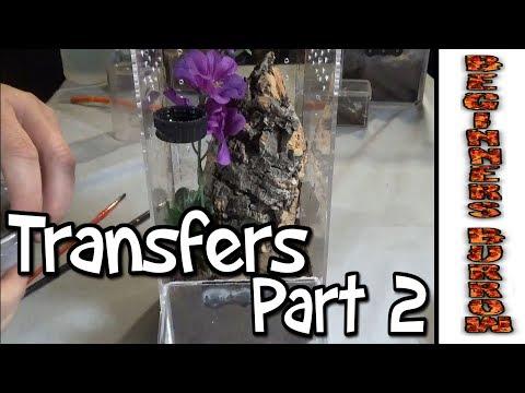 Arboreal Transfers Part 2 - Beginners Burrow