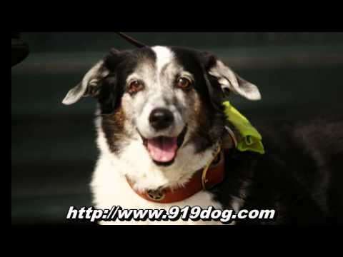 Durham Pet Sitters - Professional Dog Walking & Sitting Services