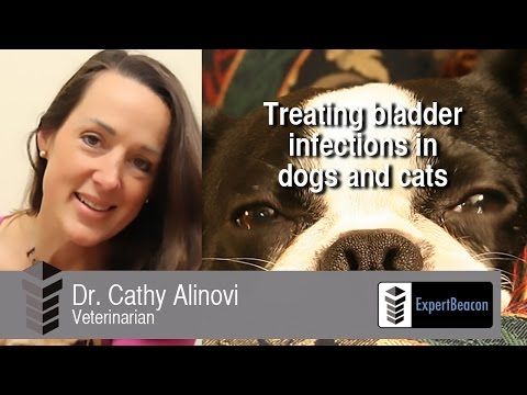 Treating bladder infections in dogs and cats