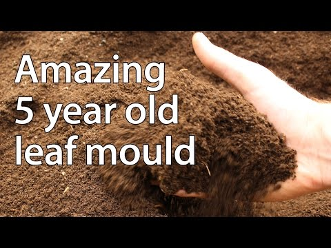 A Look at 5 Year Old Leaf Compost - And the Importance of Healthy Soil